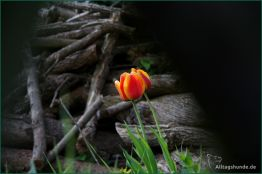 2011_04_12_1035