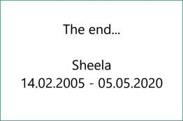 x_Leerbild_800x_Sheela